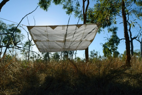 Hosho tarp hangs over grasses at Bimblebox