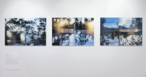 Reconfigured Landscape no. 1, 2, 3.  Shayna Wells, photo Carl Warner.  Currently touring with Bimblebox: art - science - nature.