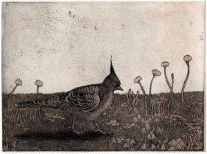 Crested Pigeon II, 2014, Kyoko Imazu, photo courtesy of artist