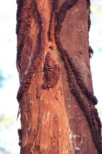 Tree trunk trails, photo Jill Sampson 2014.