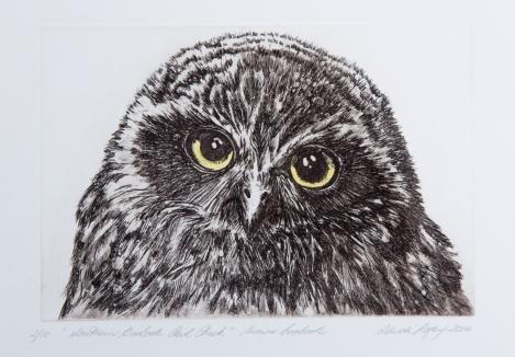Southern Boobook Owl Chick, 2014, Sandi Rigby, photo Paula Quintela